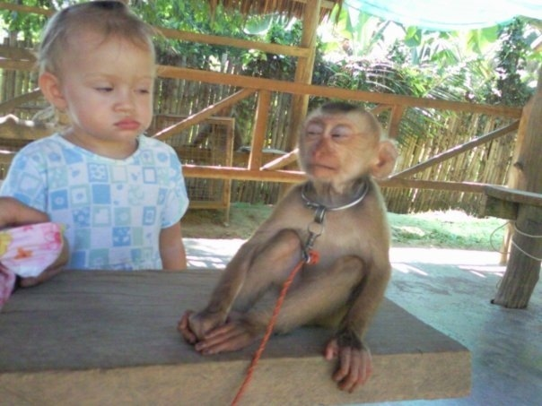 Are we really related to monkeys? Sounds suspicious.